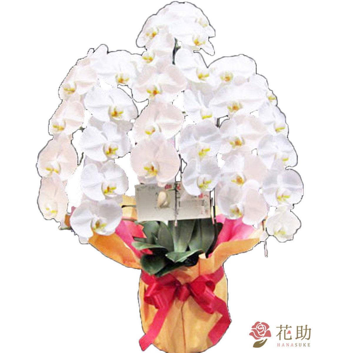 就任祝い、開業・開店祝い、移転、祝い、誕生日祝いなどのお祝いに最適 色が選べる フラワーコンシェルジュが厳選した花屋の胡蝶蘭 3本立ち 30輪以上 30000円 鉢花【楽ギフ_メッセ】