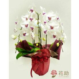 【鉢花】フラワーコンシェルジュが厳選した花屋の季節の花鉢 送料無料 18000円 【あす楽対応】