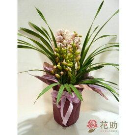 【鉢花】フラワーコンシェルジュが厳選した花屋の季節の花鉢 送料無料 9000円 【あす楽対応】【楽ギフ_メッセ入力】