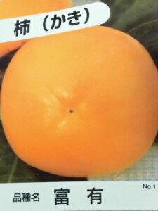 カキ・富有柿 【10本セット】 樹高0.6m前後 15cmポット 【Y1送料無料】 フユウガキ /