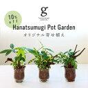 【10%OFF スーパーSALE限定】はなつむぎオリジナル寄せ植え Hanatsumugi Pot Garden 3号 3寸 25cm おまかせ 観葉植物 セット 初心者 …