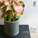 Doris 16D ドリス16 植木鉢 鉢 ポット セメント 5号 5寸 直径 16cm 高さ 18cm 穴あり 受け皿付き グレー ストライプ ライン