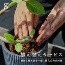 植え替えサービス300円 観葉植物 植木鉢