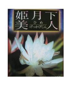 ※月下美人の仲間 孔雀サボテン 姫月下美人【花なし・開花見込み株】(5号)