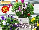 パンジー&ビオラのハンギングバスケット 寄せ植え 「3色セット福袋」(シンプル)開花期:今から春まで(ハンギング/寄せ植え/秋/冬/セッ…