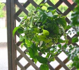 【在庫限定】花うるるアレンジ・観葉植物のハンギングバスケット 寄せ植え「*Foliage plants*」 (夏・ギフト・ガーデニング・セット・プランター・花・ミニ観葉・誕生日・限定・新築祝いなど