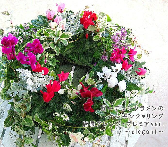 【送料無料】ガーデンシクラメンのハンギングリース寄せ植え・花うるるアレンジ「Ring〜エレガント」(寄せ植え/秋/冬/玄関/リース/誕生日/おしゃれ/結婚祝い/リースお祝い/ギフト/プレゼント/リース