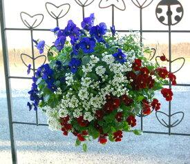 [送料無料] ビオラのハンギングバスケット寄せ植え「GALAXY〜ブルー&レッド」(シンプル)開花期:今から春まで(ハンギング/寄せ植え/秋/冬/セット/ギフト/花/フラワー(2020)
