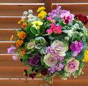 【お正月飾り】【送料無料】葉牡丹(ハボタン)のハンギング寄せ植え「雪花(ゆきはな)」(Mサイズアレンジ)(正月 飾り/お…
