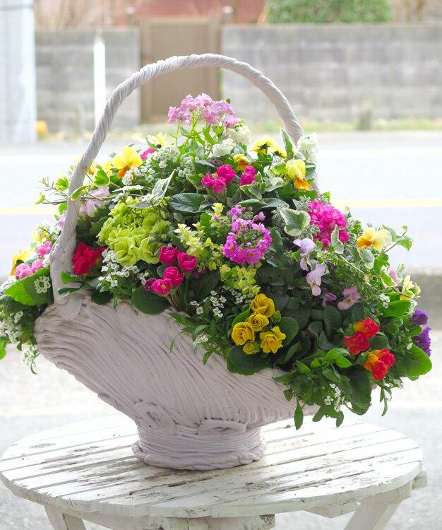 【数量限定】【送料無料】まるで宝石箱のような、新春のプレミアム寄せ植え 花うるるアレンジ『ジュエリーバスケット*ギャザリング2018』(誕生日・結婚祝い・プレゼント・セット・ギフト・開店祝い・季節の花)