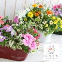 【送料無料】ブリキ製プランター寄せ植え「花うるるおまかせアレンジin ブリキ」(秋・冬・屋外・玄関・ベランダガー…