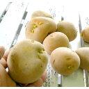 【じゃがいも 種芋 種イモ】 長崎県産ホクホク「ニシユタカ 1kg」 【苗】【種】【ばれいしょ】【ジャガイモ】【家庭菜園】【苗】 秋植え
