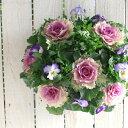 【お正月飾りに】【送料無料】葉牡丹(ハボタン)のハンギング寄せ植え「空(そら)」(正月 飾り/お正月飾り/玄関/アレン…