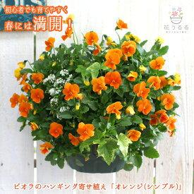 [送料無料] ビオラのハンギングバスケット寄せ植え「オレンジ」(シンプル)開花期:今から初夏まで(ハンギング/寄せ植え/ギフト/花/フラワー/誕生日 プレゼント(2020)寄植え/ガーデニング/フェンス/プランター