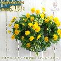 【70代】母の日にピッタリの鉢植えで可愛い花は?【予算5,000円】