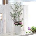 【選べる鉢4種類】【送料無料】「オリーブの木 〜季節の花を寄せ植え ホワイト&ブラック(高さ110〜120cm前後)」(ご自宅用 店舗 メイ…