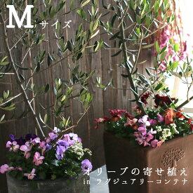 【送料無料】「オリーブの木 寄せ植え in ラグジュアリーコンテナ M(高さ110cm〜130cm)」 ご自宅用 店舗 メインツリー シンボルツリー フラワー ギフト 開店祝い セット 贈り物 鉢 誕生日 ギフト 新築祝いなどに