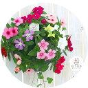 花うるるのハンギング寄せ植え「ニチニチソウのカラフルMIX」開花期:5ー11月(寄せ植え ギフト フラワー 玄関 ガーデ…