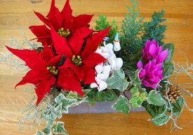 【ミニトレー寄せ植えのみ・入れ替え用】ミニ花はなフレームのXmasアレンジ寄せ植え「静かな森で」(寄せ植え クリスマス