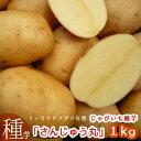 【新品種 限定入荷】秋植え じゃがいも 種イモ「さんじゅうまる 1kg」(長崎県産) じゃがいも 種いも【ばれいしょ】…