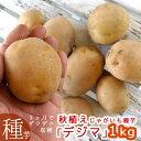 秋植えじゃがいも 種イモ「デジマ 1kg」(長崎県産) 馬鈴薯 じゃがいも 種いも【苗】【種】【ばれいしょ】【ジャ…