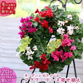 【ガーデンシクラメンのハンギング*リング】花うるるロングセラーの人気リース型寄せ植え 冬 春までの寄せ植え ギフト 通販 楽天寄せ植えランキング1位