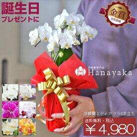胡蝶蘭 カララ(ミニミディ) 4本立ち ラッピング付き 誕生日プレゼント 鉢花 フラワーギフト お中元 ※KG