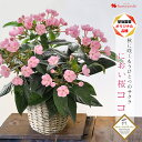 鉢植え プレゼント ギフト 花 送料無料 花由厳選!季節の鉢花 バスケット付 におい桜 ココ 花鉢 花 誕生日 プレゼント…
