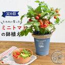 父の日 プレゼント 送料無料 実付でお届け♪ モリヒロ園芸さんのミニトマト inブリキ鉢 トマト プチトマト父の日ギフ…