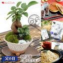 父の日 ギフト 送料無料 創作盆栽ガジュマル と 選べる3種類のグルメ 和菓子(どら焼き&きんつば)・老舗のお蕎麦・…