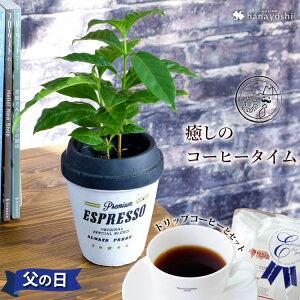父の日 ギフト 送料無料 コーヒータイム コーヒーの木 ミニ観葉植物 &徳島ブラジルコーヒーさんのドリップコーヒーのセット コーヒー ギフト 父の日 プレゼント ドリップバッグ コーヒー