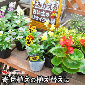 よみがえる私のお庭〜Let's Re ガーデニング♪花苗(おまかせ)16個と古い土がふっかふか♪になる土壌改良材セット【栽培セット】【植え替え用】