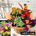 季節のおまかせ花鉢とグリーンの寄せ入れMサイズ フラワーバスケット 鉢植え フラワーギフト お誕生日 お花 誕生日 プ…