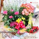 季節のおまかせ花鉢とグリーンの寄せ入れLサイズ◎フラワーバスケット 即日発送 花 鉢植え ギフト おしゃれ クリスマ…