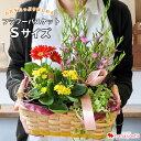 季節のおまかせ花鉢とグリーンの寄せ入れ Sサイズ フラワーバスケット 鉢花 ギフト 花 誕生日 プレゼント 女性 母 祖…