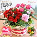 季節のおまかせ花鉢とグリーンの寄せ入れ Sサイズ フラワーバスケット 鉢花 ギフト おしゃれ 花 誕生日 プレゼント 女…