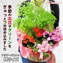季節のおまかせ花鉢とグリーンの寄せ入れMサイズ フラワーバスケット フラワーギフト 花 誕生日 プレゼント 女性 女友…