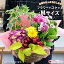 季節のおまかせ花鉢とグリーンの寄せ入れMサイズ フラワーバスケット フラワーギフト お誕生日 お花 プレゼント 女性 …