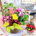 季節のおまかせ花鉢とグリーンの寄せ入れMサイズ フラワーバスケット 鉢植え フラワーギフト お誕生日 お花 クリスマ…