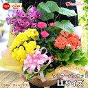 季節のおまかせ花鉢とグリーンの寄せ入れ LLサイズ 鉢花 フラワーバスケット お誕生日 お花 開店祝い 開業祝い おしゃ…