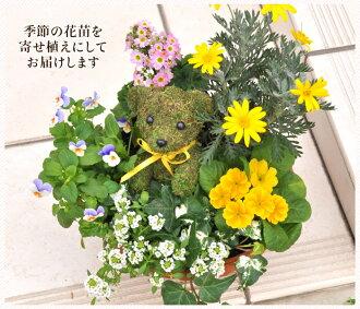 Hanayoshi rakuten global market like flowers topiary bonsai product name product name negle Images