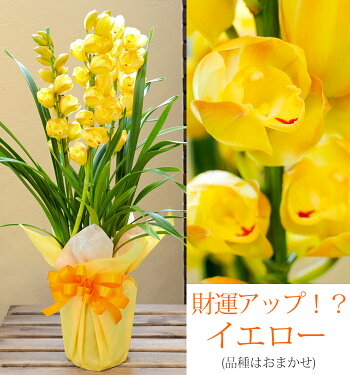 ラッピング一例。ご用途・花色にあわせてコーディネートします。