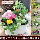 花色とプランターが選べる 季節のおまかせカントリーガーデン〜旬のお花をたっぷり寄せ植え 花 鉢 鉢植え 寄せ植え ギ…
