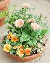 季節のおまかせSサイズ〜旬のお花をたっぷり寄せ植え〜【寄せ植え ギフト 鉢 誕生日 プレゼント 鉢植え ギフト 花 女…