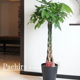 観葉植物 大型 パキラ 10号鉢 黒丸鉢皿付 送料無料