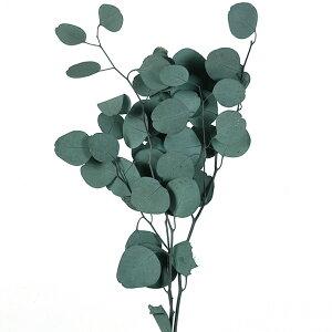 ユーカリ ポプルス グリーン 丸い葉 リーフ 40g ポポラス 花材 プリザーブドフラワー インテリア リース 飾り付け 葉もの ナチュラルインテリア 大地農園