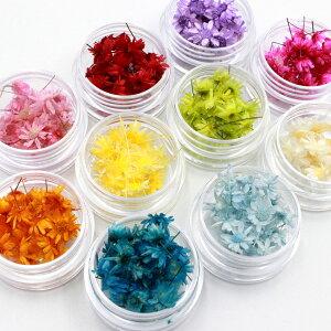 花材 小分け スターフラワー マルセラドライ レジン用花材 材料 素材 アロマサシェ ハーバリウム 小さいお花 少量