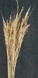 稲穂 ドライフラワー イナホ ゴールド リース 花材 ドライフラワー ハーバリウム インテリア  祝い 豊作 大地農園 金色 正月