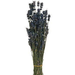 ドライフラワー ラベンダー 北海道富良野産 花材 サシェ 花束 香り 長さ約40cm 約30g  ハーバリウム リース インテリア 飾り