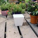 陶器鉢 植木鉢 ホワイトポットスクエア型 Mサイズ 直径13cm×高さ13cm 角